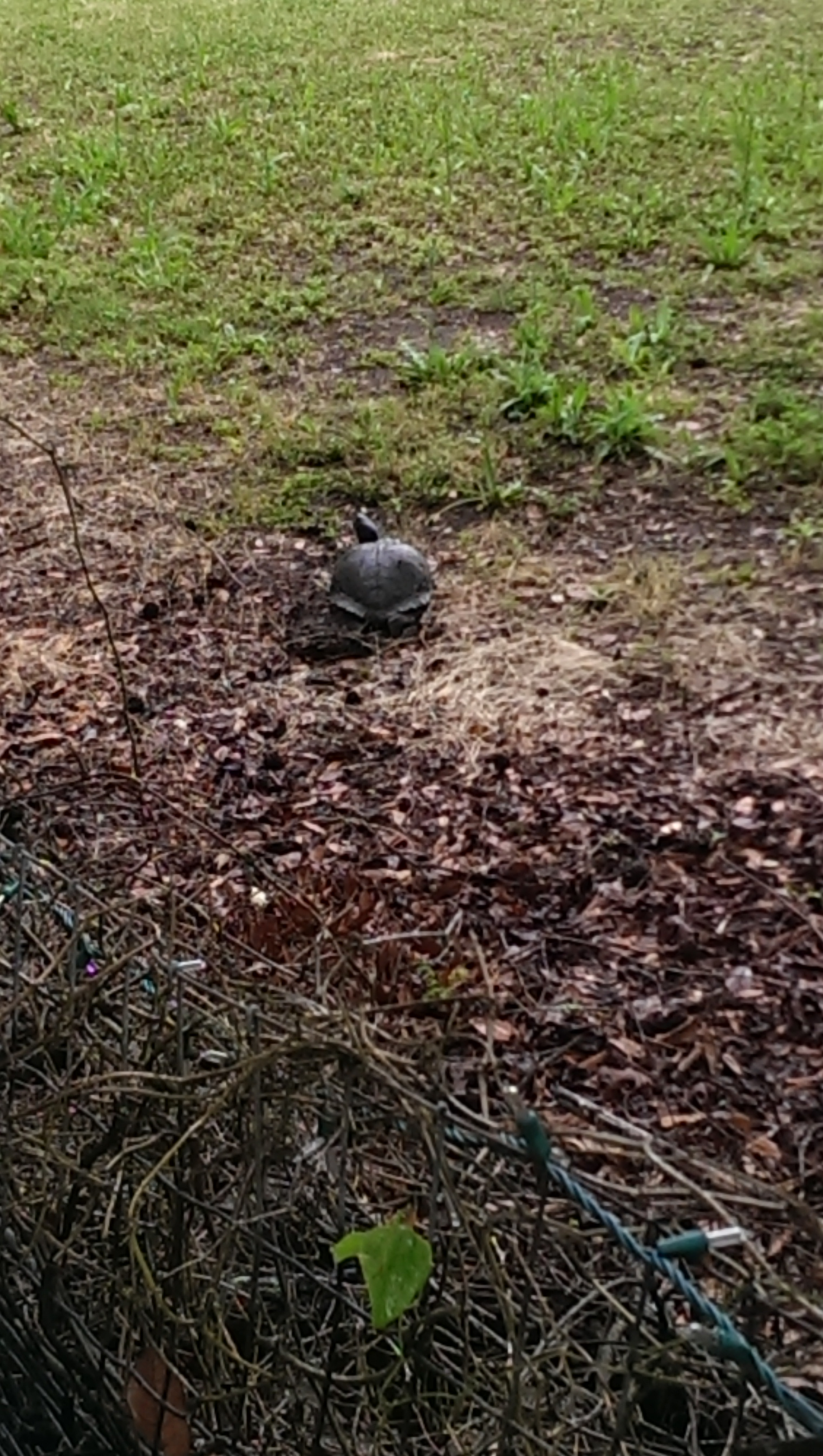turtle laying eggs by the swash
